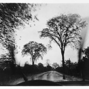 Roadside Elms, 1974