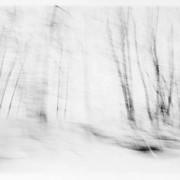 White Woods, 1984